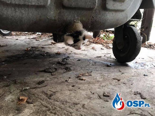Kot utknął w kontenerze na śmieci. Uwolnili go strażacy z OSP Knyszyn. OSP Ochotnicza Straż Pożarna