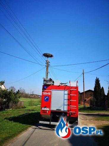 Strażacy pomogli bocianiej rodzinie. Nietypowa akcja OSP Gaszowice. OSP Ochotnicza Straż Pożarna