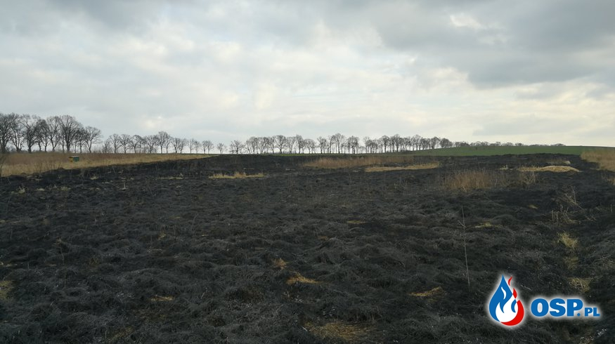 Pożar nasypu kolejowego oraz przymarzniety łabędź  OSP Ochotnicza Straż Pożarna