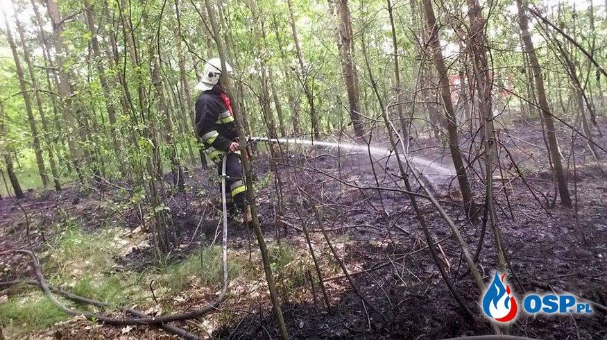 10.06.17 - Pożar poszycia leśnego w msc. Górki-Gilów OSP Ochotnicza Straż Pożarna