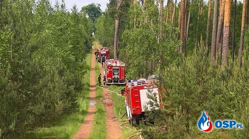 Pożar lasu obok Rudy Kozielskiej - wojewódzkie ćwiczenia Straży Pożarnej. OSP Ochotnicza Straż Pożarna