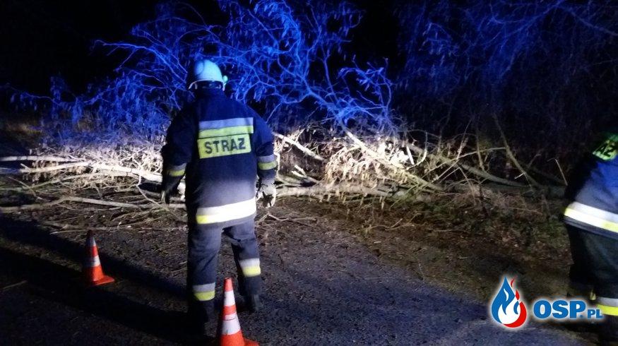 Silny  wiatr - powalone drzewa OSP Ochotnicza Straż Pożarna