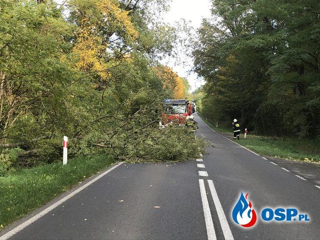 195/2020 Drzewo na drodze pomiędzy Chojną a Mętnem OSP Ochotnicza Straż Pożarna