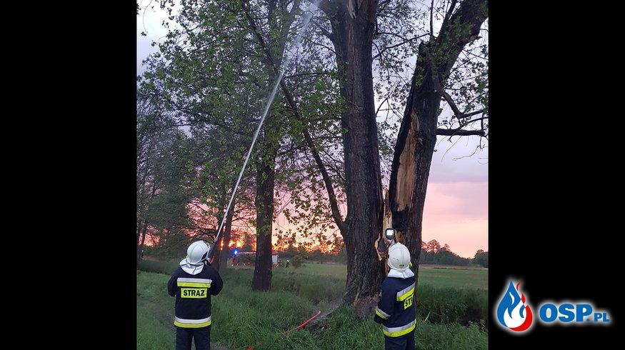 Pożar drzewa w Grabowie OSP Ochotnicza Straż Pożarna