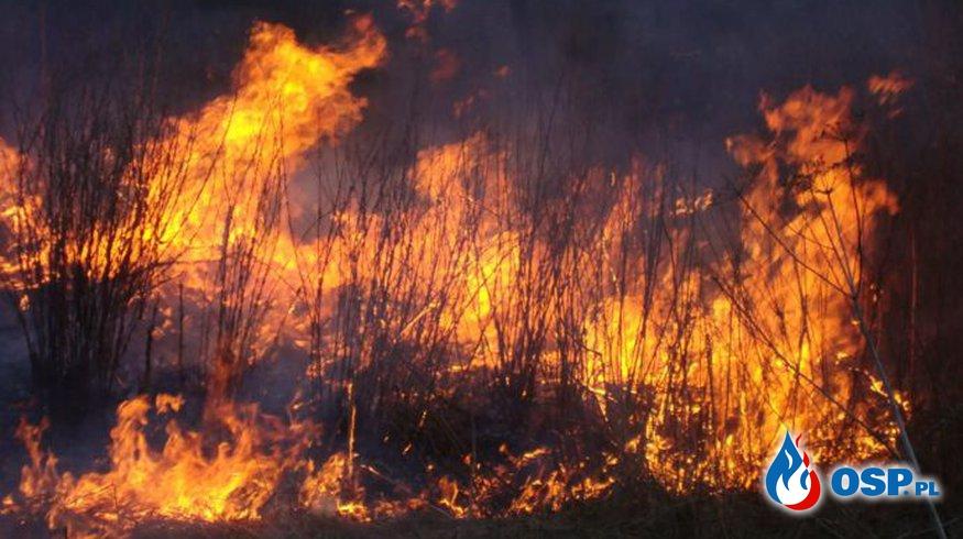 Pożar trawy w Solinie OSP Ochotnicza Straż Pożarna