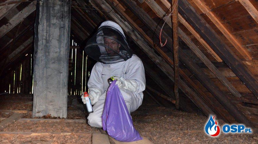Usuwanie gniazd niebezpiecznych owadów OSP Ochotnicza Straż Pożarna