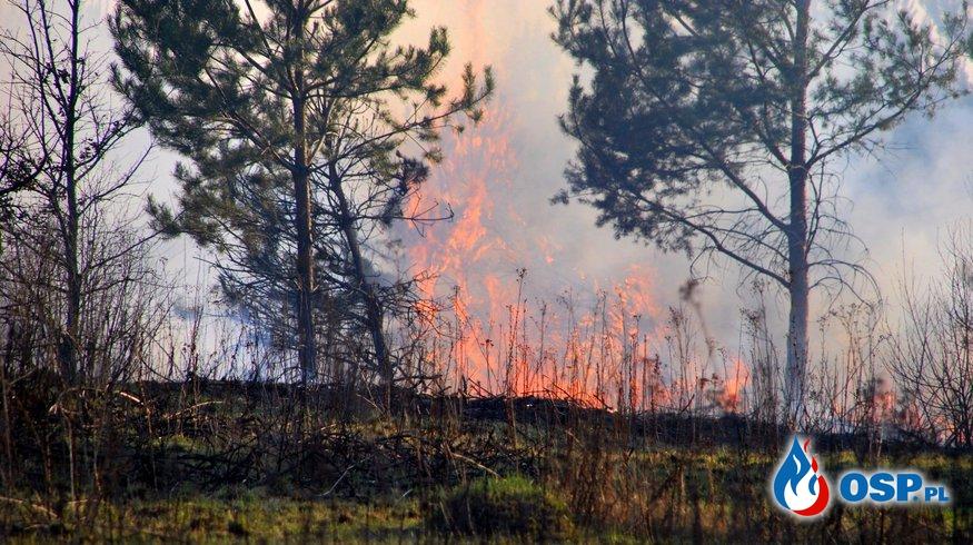 STOP Wypalaniu TRAW ! Apel Strażaków! OSP Ochotnicza Straż Pożarna