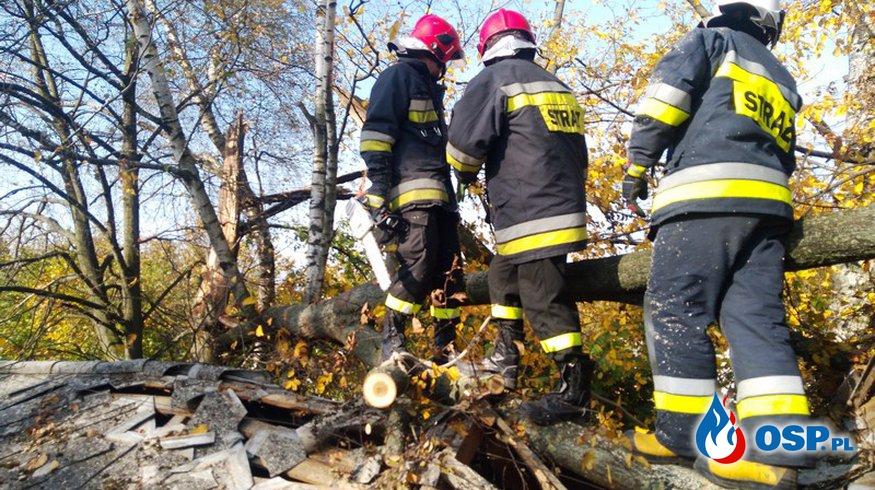 Uszkodzony dach spadającym konarem OSP Ochotnicza Straż Pożarna