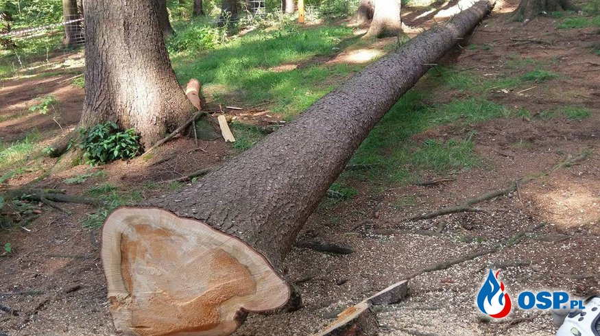 [Wideo] Niebezpiecznie pochylone drzewo w paku linowym !  OSP Ochotnicza Straż Pożarna