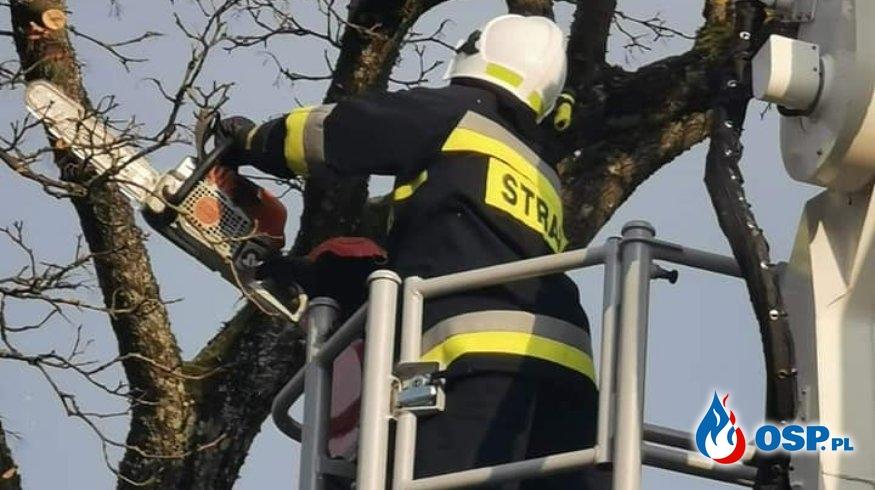 Gmina Biały Bór.M.Stępień Drzewo Nad Drogą OSP Ochotnicza Straż Pożarna