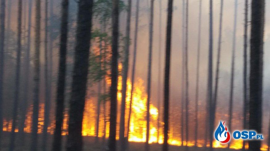 Rzeczyca-Pożar Lasu  OSP Ochotnicza Straż Pożarna