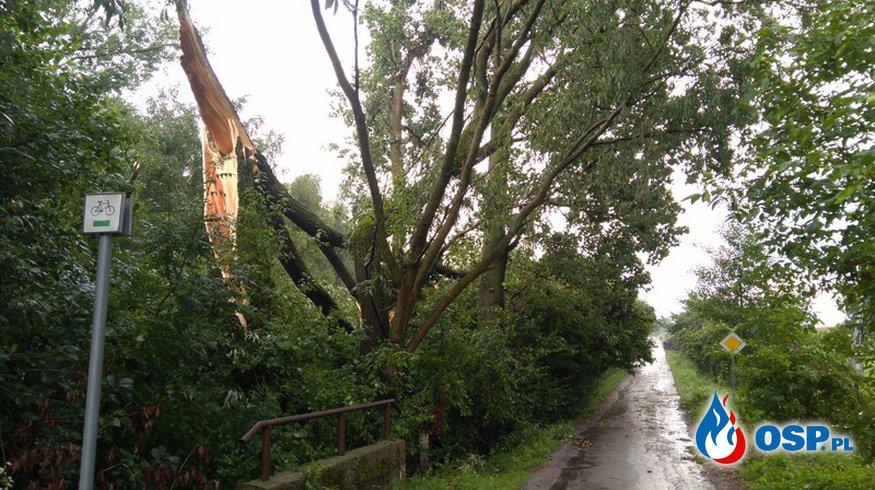 Złamane drzewo i gniazda szerszeni OSP Ochotnicza Straż Pożarna