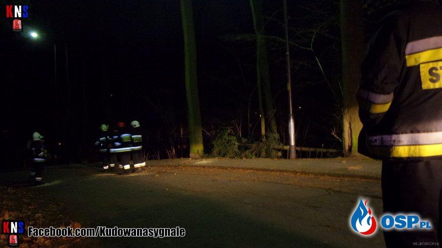 Powalone drzewo na ul. Stanisława Moniuszki OSP Ochotnicza Straż Pożarna