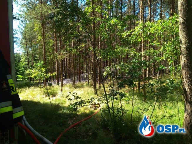 08.06 Pożar ściółki leśnej Zalesie gm.Rzeczenica. OSP Ochotnicza Straż Pożarna