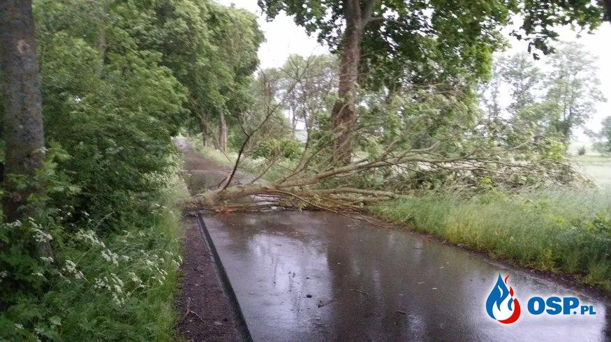 Silne wiatry...Przewrócone drzewo OSP Ochotnicza Straż Pożarna