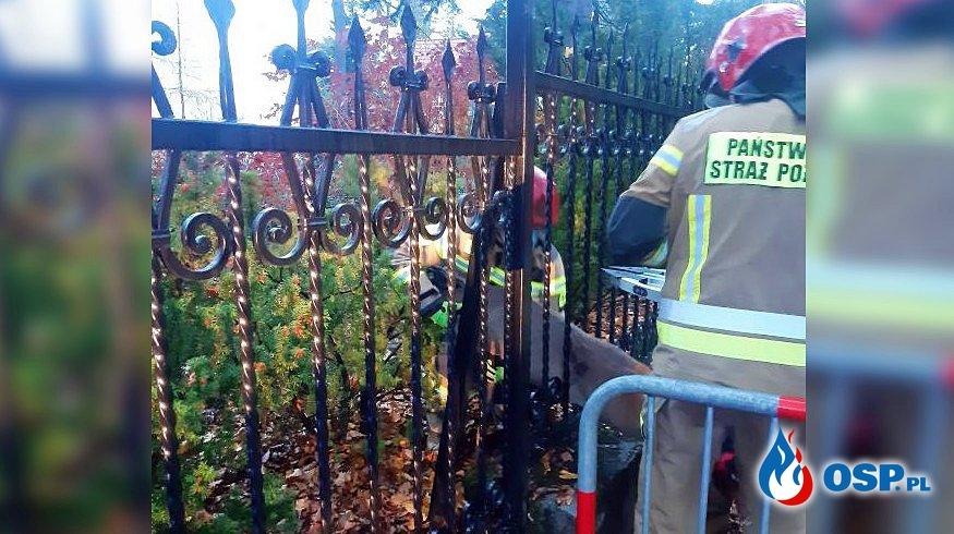 Sarna utknęła w ogrodzeniu. Z pomocą przyszli strażacy z Zakopanego. OSP Ochotnicza Straż Pożarna