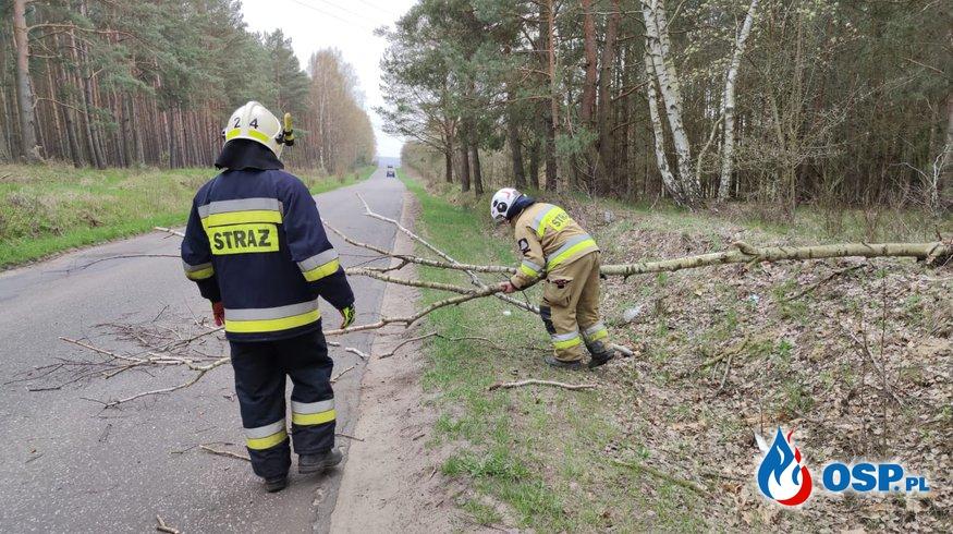 81/2021 Drzewo na drodze OSP Ochotnicza Straż Pożarna