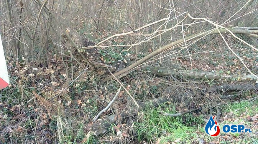 Powalone drzewo na jezdnię OSP Ochotnicza Straż Pożarna