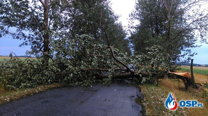 Usuwanie skutków burzy. 3 interwencje w tym powalony konar drzewa na samochód OSP Ochotnicza Straż Pożarna