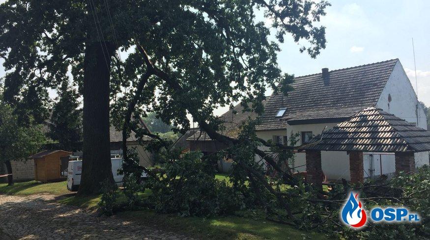 Oberwany konar drzewa na linii elektrycznej pod napięciem w Prężynie OSP Ochotnicza Straż Pożarna