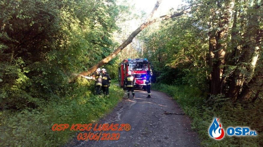 Pochylone drzewo OSP Ochotnicza Straż Pożarna