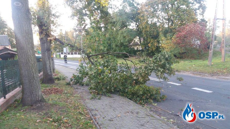 Usunięcie zwisajacego konaru  drzewa  OSP Ochotnicza Straż Pożarna