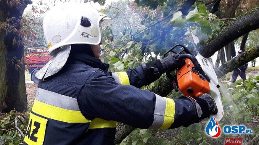 Przewrócone drzewa na skutek silnego wiatru OSP Ochotnicza Straż Pożarna