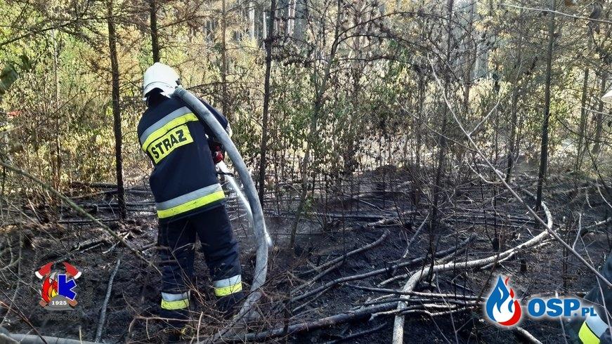 Pożar lasu w Ligocie Prószkowskiej OSP Ochotnicza Straż Pożarna