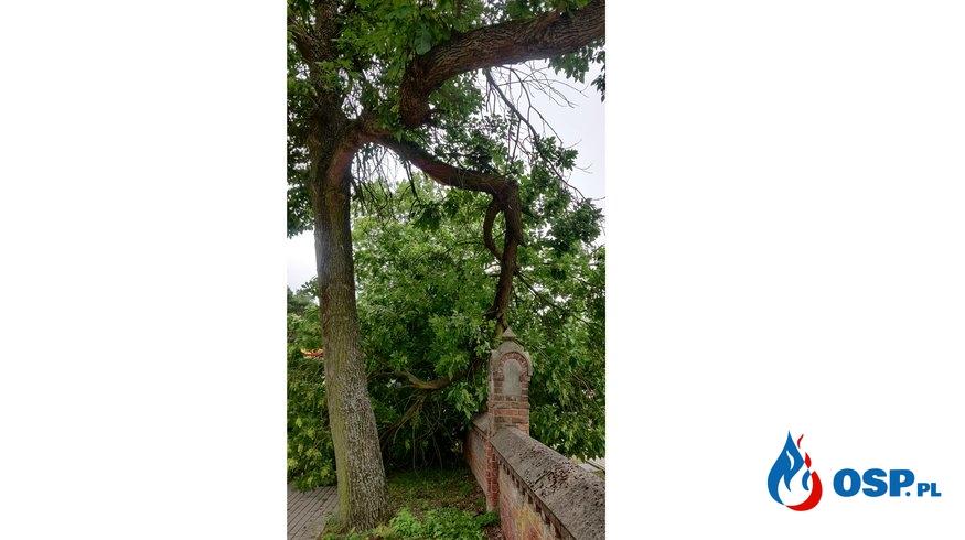 Pochylony konar drzewa przy cmentarzu w Dobrowie OSP Ochotnicza Straż Pożarna