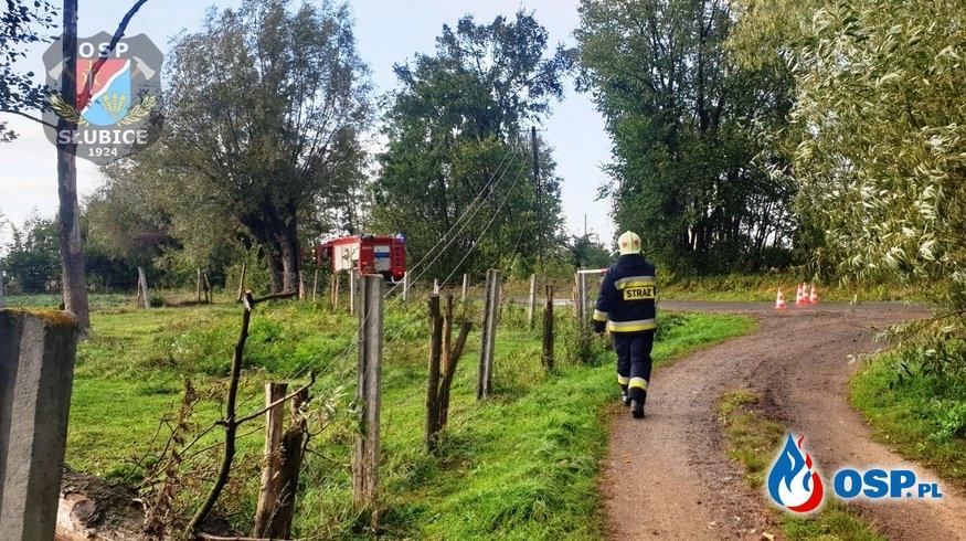 Powalone drzewo i zerwana linia OSP Ochotnicza Straż Pożarna