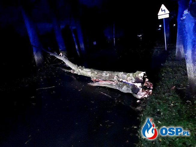 Orkan Grzegorz i złamane drzewa. OSP Ochotnicza Straż Pożarna