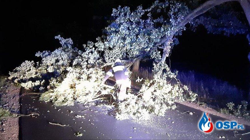 Powalony konar drzewa OSP Ochotnicza Straż Pożarna