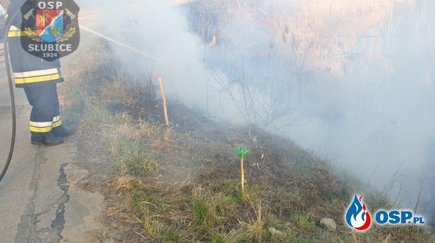 Pożar traw i trzcin OSP Ochotnicza Straż Pożarna