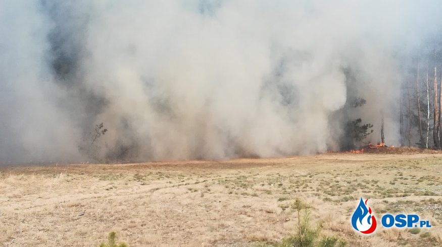 Pożary lasów OSP Ochotnicza Straż Pożarna