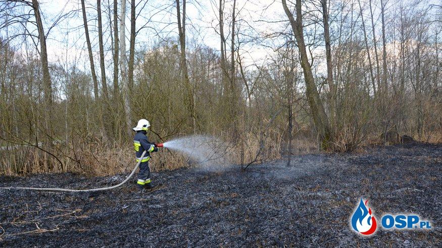Pożar suchej trzciny i trawy OSP Ochotnicza Straż Pożarna