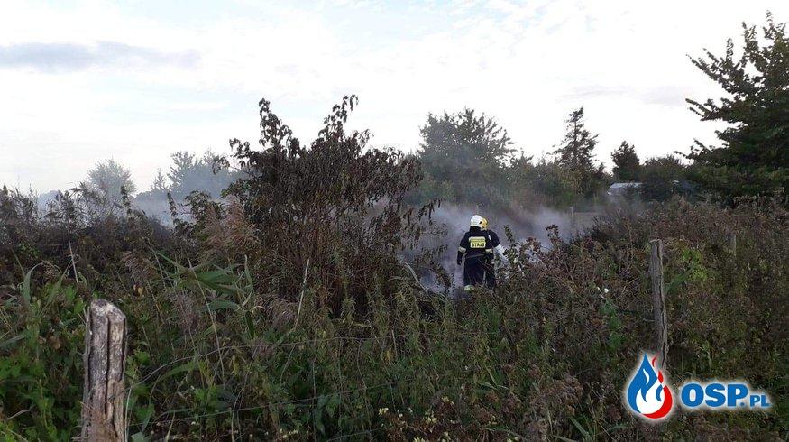Pożar kompostownika i ogrodzenia OSP Ochotnicza Straż Pożarna