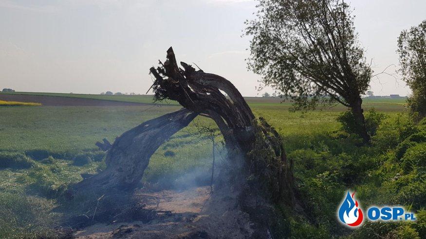Pożar drzewa i zalanie mieszkań jednego dnia OSP Ochotnicza Straż Pożarna