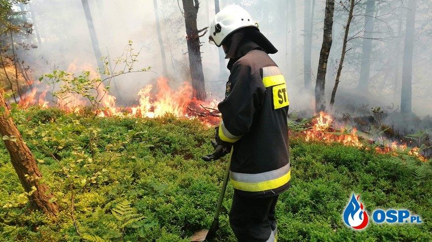 Pożar poszycia leśnego. OSP Ochotnicza Straż Pożarna