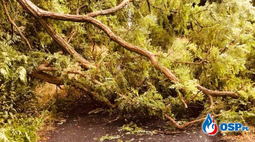 Powalone drzewo na trasie Krajnik Dolny - Zatoń OSP Ochotnicza Straż Pożarna