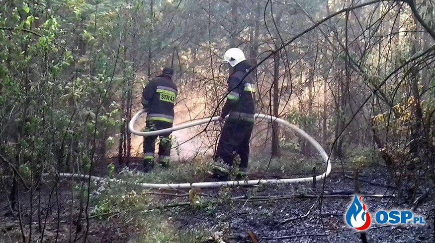 01.06.17 - Pożar poszycia leśnego msc. Górki. OSP Ochotnicza Straż Pożarna