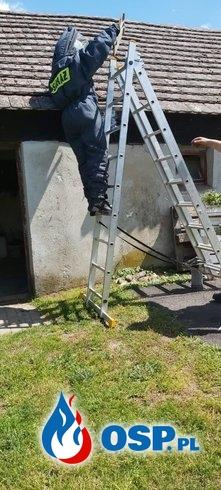 Gniazdo pszczół w budynku gospodarczym OSP Ochotnicza Straż Pożarna