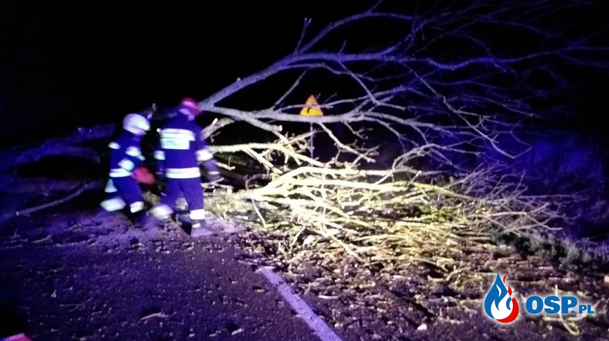 2019-01-02 Godz.4:50- powalone drzewo OSP Ochotnicza Straż Pożarna