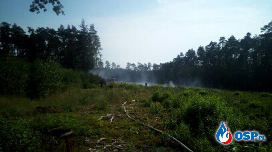 Pożar lasu w okolicy Brodowa OSP Ochotnicza Straż Pożarna