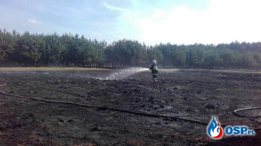 Pożar poszycia leśnego i nieużytków OSP Ochotnicza Straż Pożarna