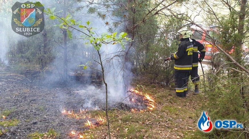 Pożar w lesie i konar drzewa na drodze OSP Ochotnicza Straż Pożarna