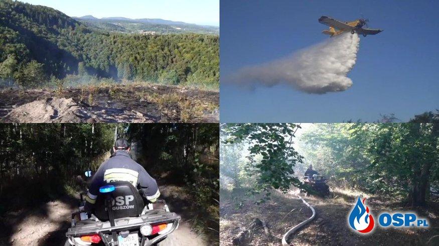 Trudny pożar lasu na wzgórzu. Do akcji wkroczyły samoloty gaśnicze. OSP Ochotnicza Straż Pożarna