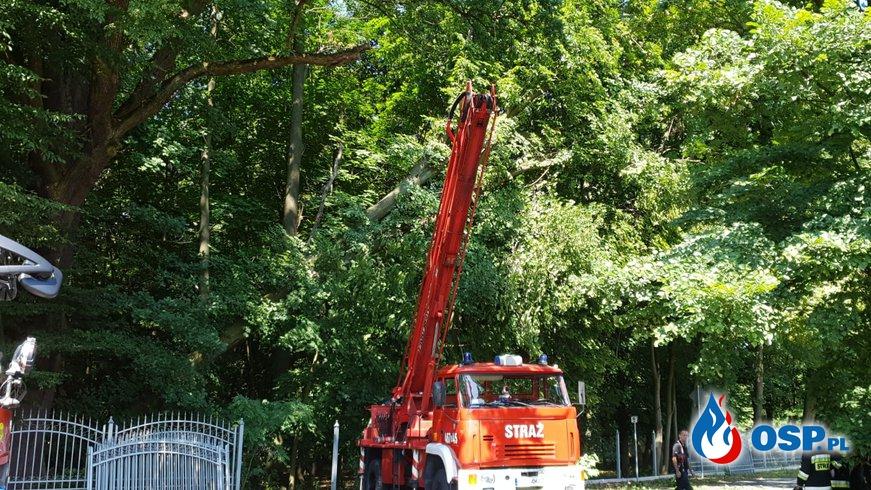 Pochylone drzewo nad drogą powiatową OSP Ochotnicza Straż Pożarna