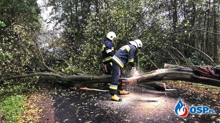 Powalone drzewo na drodze w Turach OSP Ochotnicza Straż Pożarna