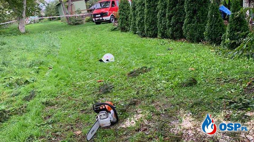 Wycinka zagrażających choinek na ogródkach działkowych. OSP Ochotnicza Straż Pożarna