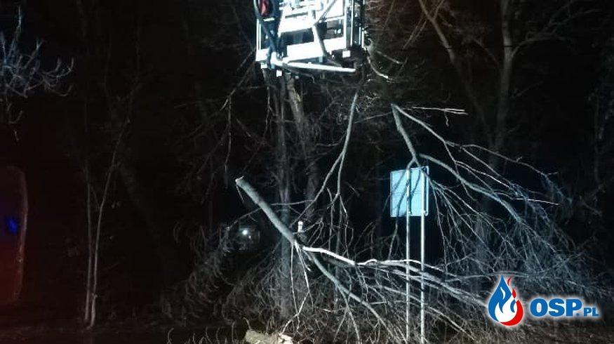 Powalone drzewo OSP Ochotnicza Straż Pożarna